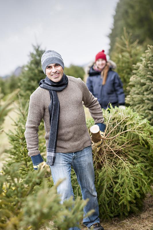 christmas tree lot insurance