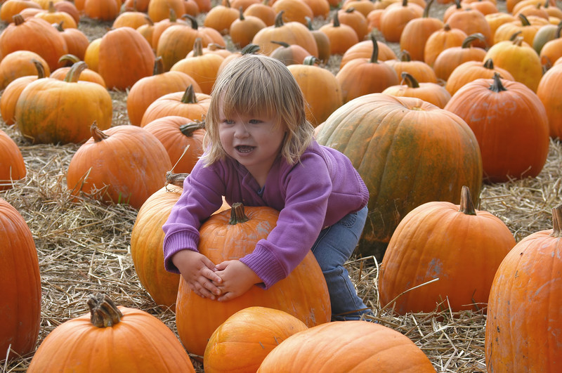 pumpkin patch insurance